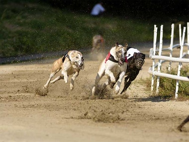 Friday Night At The Dogs in Manchester