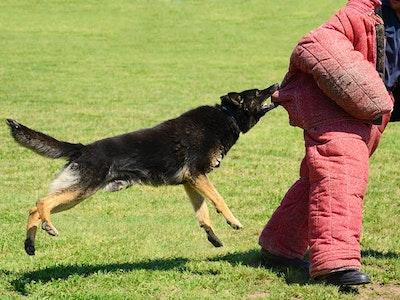 Rabid Dog Chase